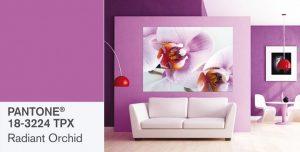 Orquidea-Radiante-Pantone20142  los colores del 2014 Orquidea Radiante Pantone20142